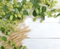 啤酒花球果树和耳朵在轻的背景 免版税图库摄影