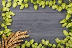 啤酒花球果树框架与麦子的耳朵的在黑木背景的 与拷贝空间的顶视图您的文本的 免版税图库摄影