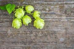 啤酒花球果树 图库摄影