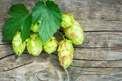 啤酒花球果树 库存照片