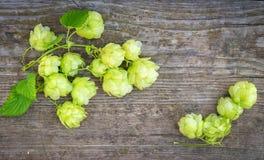 啤酒花球果树 免版税库存照片