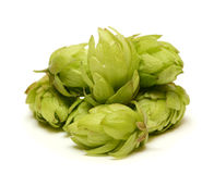 啤酒花球果树 免版税库存图片