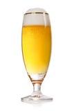 啤酒金子查出的白色 免版税库存图片