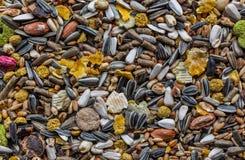 啮齿目动物食物 库存图片