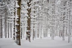 喀尔巴阡山脉的冷杉karpaty山滑雪的降雪结构树绊倒乌克兰冬天 免版税库存照片