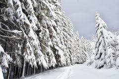 喀尔巴阡山脉的冷杉karpaty山滑雪的降雪结构树绊倒乌克兰冬天 库存图片