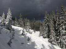 喀尔巴阡山脉的架置倾斜用雪和云杉盖 免版税库存图片