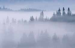 喀尔巴阡山脉的森林有薄雾的山 免版税库存图片