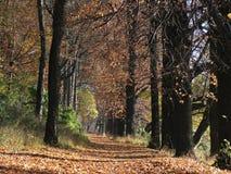 喀尔巴阡山脉的森林11月 免版税图库摄影
