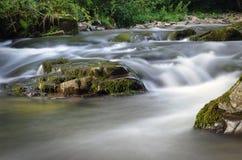 喀尔巴阡山脉的自然 免版税图库摄影