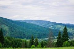 喀尔巴阡山脉范围 针叶树 免版税库存照片