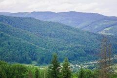 喀尔巴阡山脉范围 针叶树 免版税库存图片