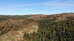 喀尔巴阡山脉鸟瞰图  在森林的光滑的飞行 股票录像
