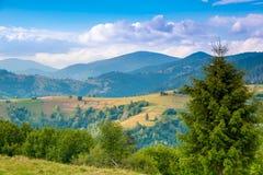 喀尔巴阡山脉和牧场地 库存照片