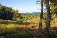 喀尔巴阡山脉的一点的迟来的夏天森林 免版税库存照片
