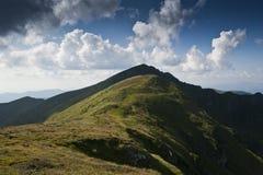 喀尔巴阡山脉的亚高山带草甸 免版税库存照片