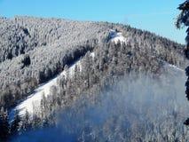 喀尔巴阡山脉的冬天烧伤杉木冬天雾 库存图片