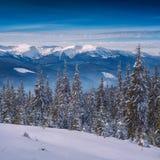 喀尔巴阡山脉的冬天谷垂直的全景  图库摄影