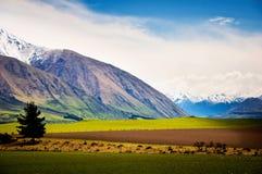 喀尔巴阡山脉的山乌克兰谷 库存照片