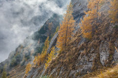 喀尔巴阡山脉的山乌克兰谷 免版税库存图片