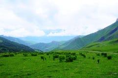 喀尔巴阡山脉的山乌克兰谷 免版税图库摄影