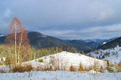 喀尔巴阡山脉的山冬天 图库摄影