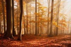 喀尔巴阡山脉的山毛榉森林,斯洛伐克。 库存图片