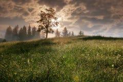 喀尔巴阡山脉的山顶视图 在一个山坡的树与太阳 库存图片
