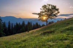 喀尔巴阡山脉的山顶视图 在一个山坡的树与太阳 免版税库存照片