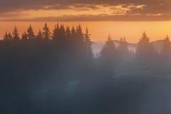 喀尔巴阡山脉的山顶视图 在森林的边缘的有雾的日出 免版税库存图片