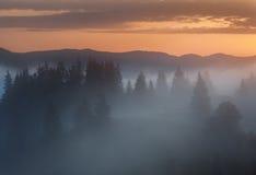 喀尔巴阡山脉的山顶视图 在森林的边缘的有雾的日出 库存图片