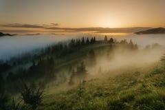 喀尔巴阡山脉的山顶视图 在森林的边缘的有雾的日出 库存照片