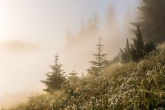 喀尔巴阡山脉的山顶视图 在用露水和雾报道的倾斜的草 图库摄影