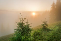 喀尔巴阡山脉的山顶视图 在雾的朝阳 免版税库存图片