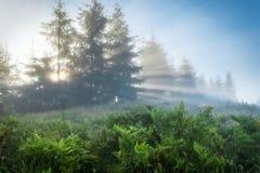 喀尔巴阡山脉的山顶视图 放出通过树的朝阳的光芒 免版税库存图片