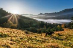 喀尔巴阡山脉的山顶视图 黎明太阳,马在雾的小山吃草 免版税库存照片