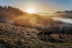 喀尔巴阡山脉的山顶视图 黎明太阳,马在雾的小山吃草 库存图片