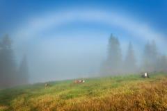 喀尔巴阡山脉的山顶视图 母牛在倾斜说谎在一条白色彩虹下 图库摄影