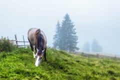 喀尔巴阡山脉的山顶视图 马在雾的绿色倾斜吃草 免版税库存照片