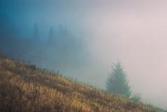 喀尔巴阡山脉的有薄雾的forest_1 图库摄影
