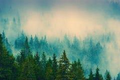 喀尔巴阡山脉的有薄雾的forest_vintage 图库摄影