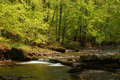 喀尔巴阡山脉的森林河 图库摄影