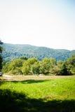 喀尔巴阡山脉的森林 库存照片