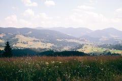 喀尔巴阡山脉的横穿intermountain横向山区域transcarpathian乌克兰视图 在领域和森林,看法之间的界限从上面 库存图片