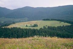 喀尔巴阡山脉的横穿intermountain横向山区域transcarpathian乌克兰视图 领域,花,山假期 图库摄影