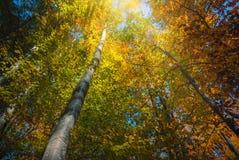 喀尔巴阡山脉的秋天森林 图库摄影