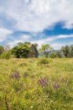 喀尔巴阡山脉的罗马尼亚草甸 免版税库存照片