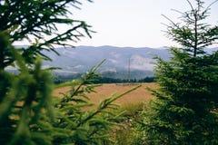 喀尔巴阡山脉的领域的看法从森林的,在分支中修剪 图库摄影