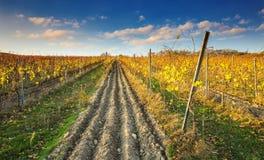 喀尔巴阡山脉的,布拉索夫, Pezinok,斯洛伐克五颜六色的秋天葡萄园 免版税库存照片