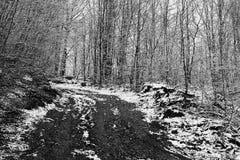 喀尔巴阡山脉罗马尼亚的风景 免版税库存照片